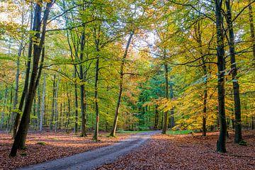 Herbst von Richard Gilissen
