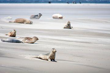 Zandbank met zeehonden op het wad van Dennis Wierenga