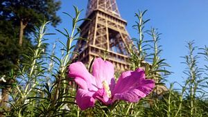 Kleurige Eiffeltoren