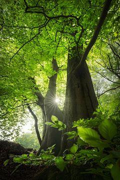 Frühlingszeit! - Frühling im Wald von Jeroen Lagerwerf