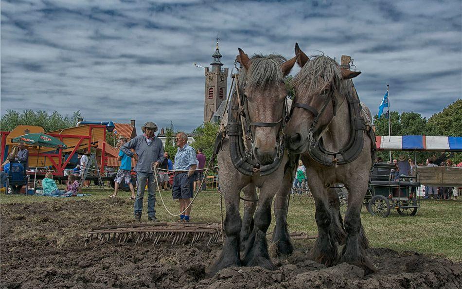 Verrassende Kinderkamer Paarden : Zeeuwse paarden van amsterdam fotografie peter bartelings op