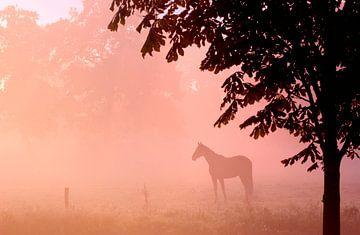 Paard in de mist von