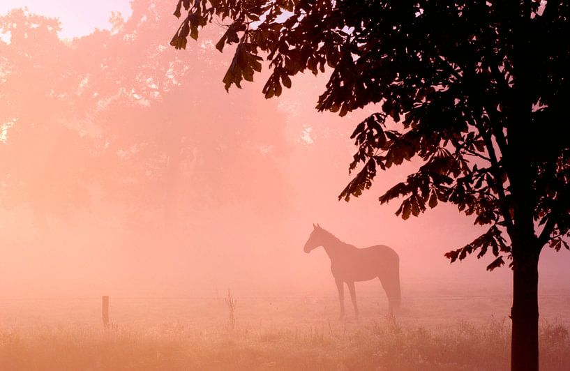 Paard in de mist van Nico Garstman