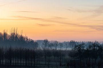 boomkwekerij in de ochtend van Tania Perneel