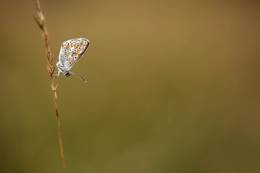 Vlinder tegen een wazige achtergrond
