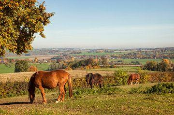 Herfstkleuren bij Epen in Zuid-Limburg van John Kreukniet