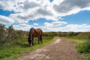 Ein grasendes Wildpferd am Rande des Weges. von Mandy Metz