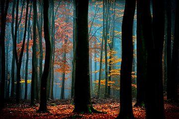 Zauberwald und Märchenlicht von Lars van de Goor