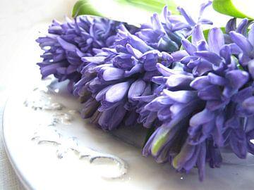 blauwe hyacint op schaal 1 van Nicolet Reus