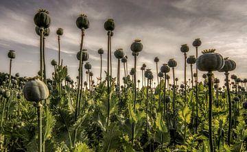 Opium van Mario de Lijser