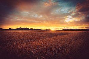 Acker im Sonnenuntergang