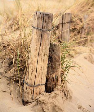 Duinpaal in duinen van Martine Moens