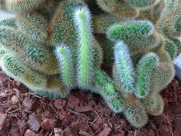 Kamerplant: SciFi Cactus 1-5 van MoArt (Maurice Heuts)