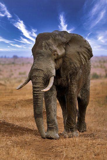 Großer Elefant wandert durch den Etosha Nationalpark in Namibia