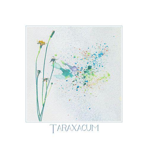 taraxacum  van Yvonne Blokland