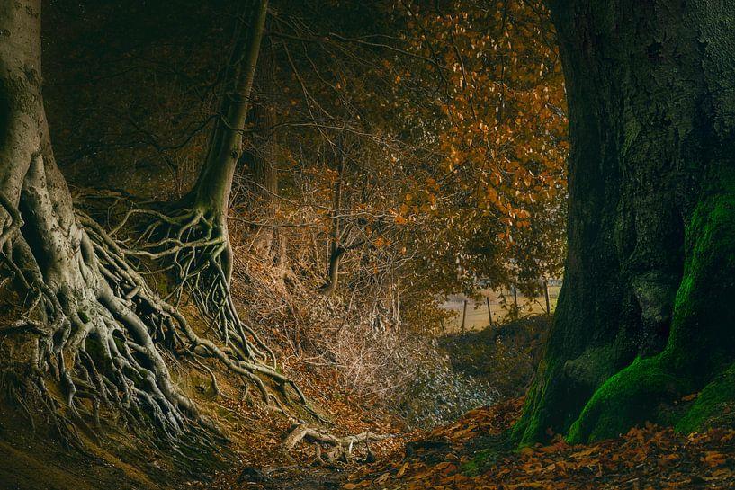 Spookachtig bos van Peter Bolman