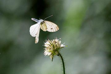 Caught in flight van Peter Bartelings Photography