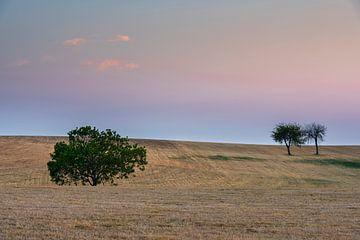 Drie bomen bij zonsondergang van