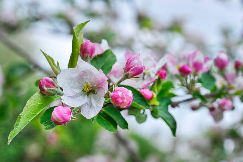 Branche fleurie sur Martine Affre Eisenlohr