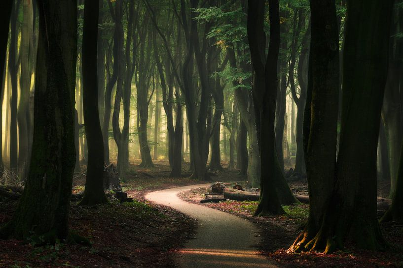 Slingerpad in het Speulderbos van Edwin Mooijaart