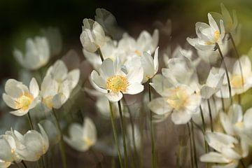 Frühling von Ada van der Lugt