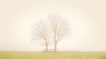 Bomen in Lentevreugd van Wim van Beelen