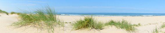 Panoramisch zicht op het strand in de zomer
