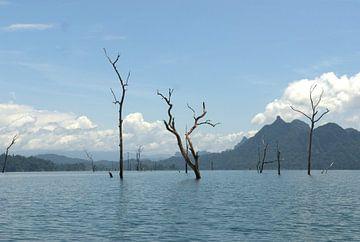 Bomen in het stuwmeer Kao Sok van