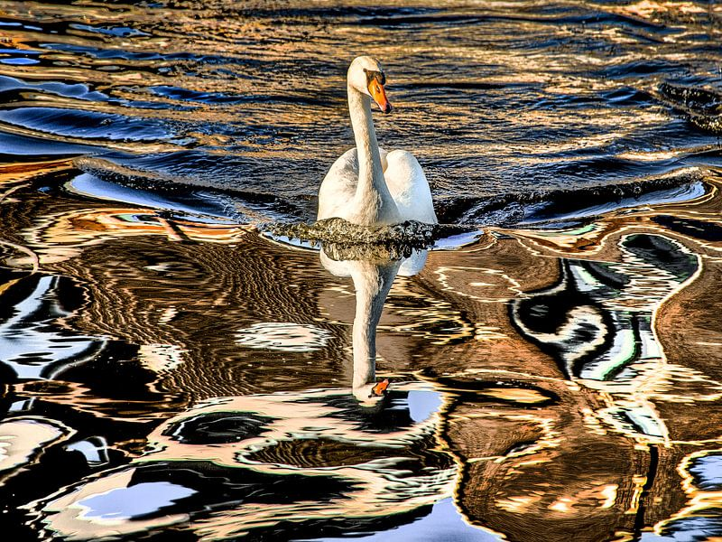 Zwaan in weerspiegelende gracht en zonlicht