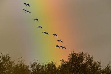 Vlucht Ganzen voor Regenboog van Robert van Brug