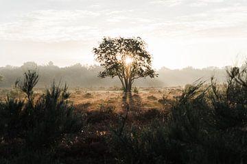 Minimalistischer Sonnenaufgang von Allround_Moments