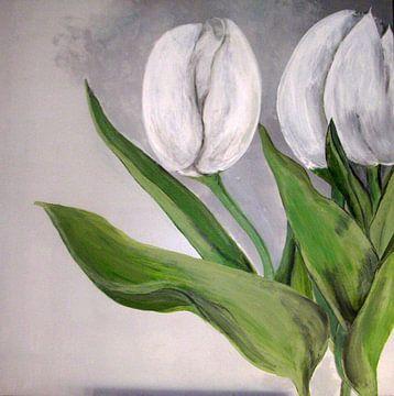 weisse tulpen von walli gutmann