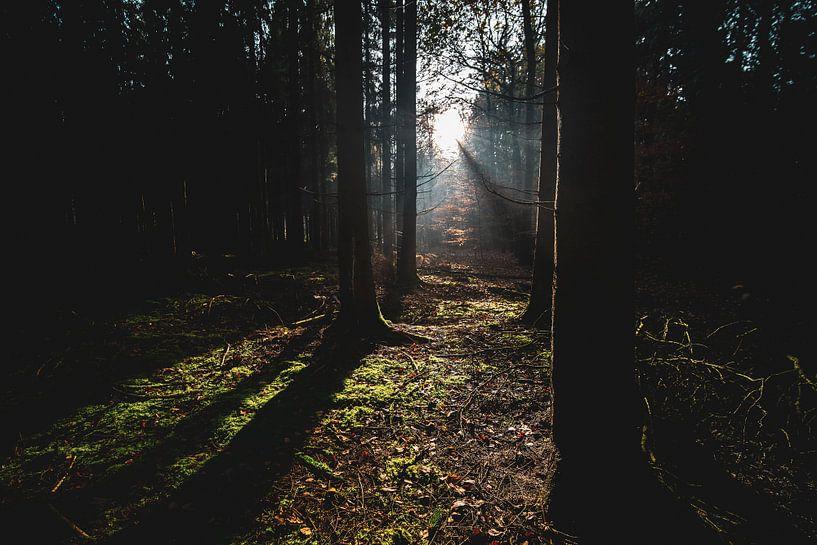 Zonnestralen in het donkere bos van Fotografiecor .nl