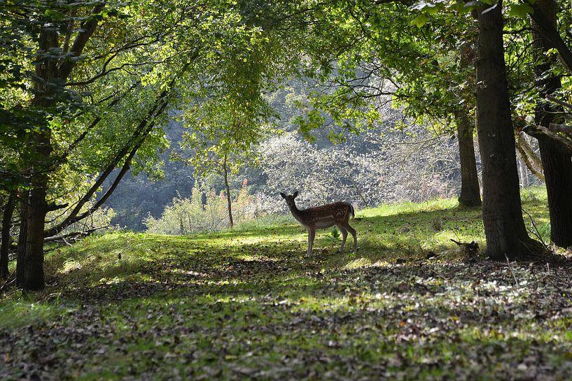 Hert op bospad van Frank de Ridder