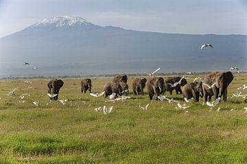 Troupeau d'éléphants dans le PN d'Amboseli au Kenya avec le Mont Kilimandjaro en arrière-plan.