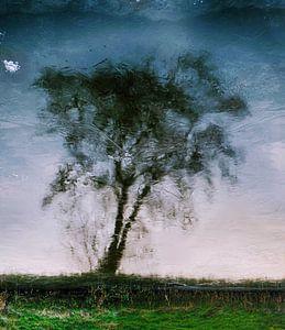 Icy tree. van Ro Rebbel