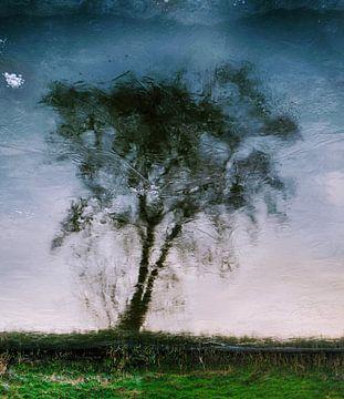 Icy tree. von Ro Rebbel