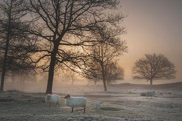 Nebeliger Morgen von Piet Haaksma