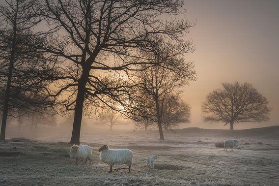 Mistige ochtend. van Piet Haaksma
