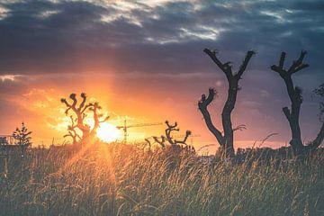 Magnifique coucher de soleil coloré sur Daan Duvillier