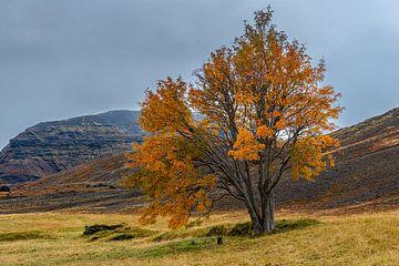 De beroemde boom van Sandfell in IJsland van Gerry van Roosmalen