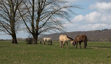 Knuffelende konik paarden van Cilia Brandts