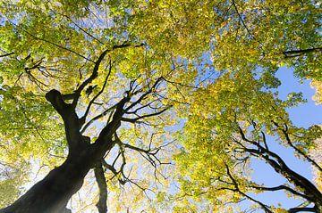 Herfstkleuren in het park van Mark Bolijn