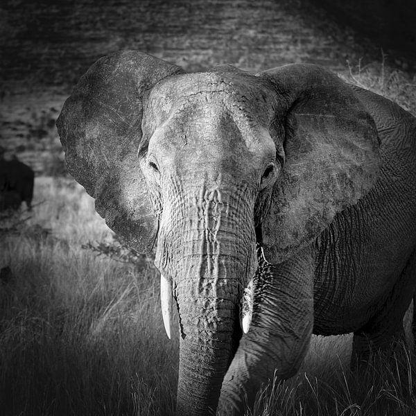 Eléphant sur Frans Lemmens