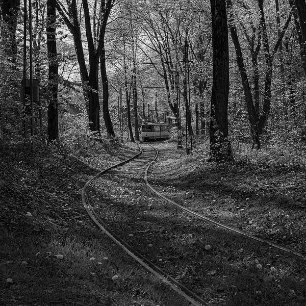 Straßenbahn im Wald (schwarz-weiß) von Sander de Jong