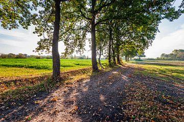 Rij hoge bomen in een landschap in herfstkleuren van Ruud Morijn