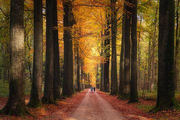 Herfst genegenheid van Joris Pannemans - Loris Photography