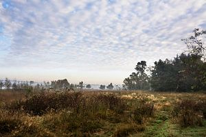 Morning mood in a marshy landscape