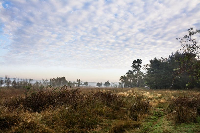 Morning mood in a marshy landscape van Edith Albuschat