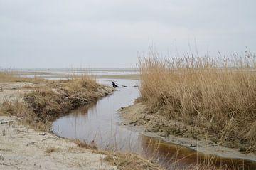 Groene strand op Terschelling (Holland) van Margriet's fotografie